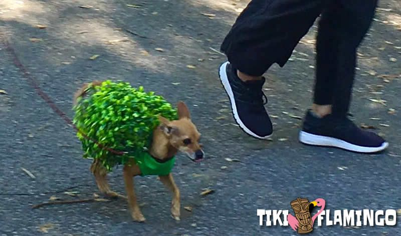 Why not turn your pet into a Chia pet this Halloween?