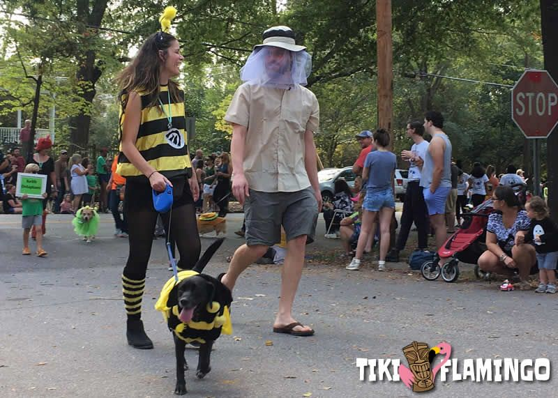 Many towns have Halloween Dog Parades which are a fun way to  share quality time with your pet and family.
