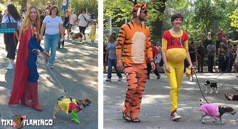 There are an endless array of great Halloween costume ideas for dogs and their parents.